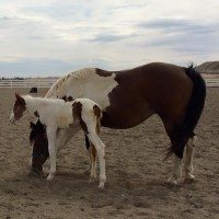 2015 Foals are here!